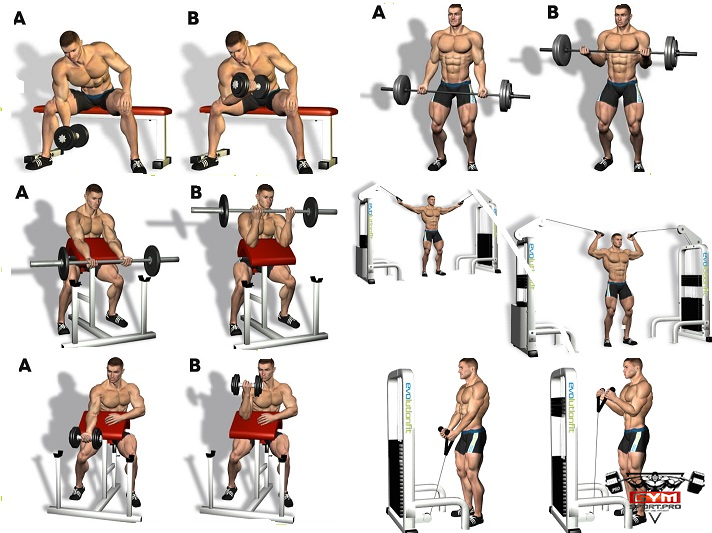 list of dumbbell exercises by muscle group dumbbell - 712×533